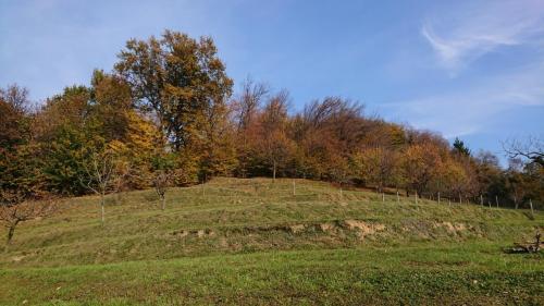 autunno dietro casa
