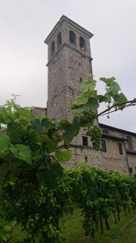 Cividale del Friuli, Vite ed arte